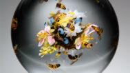 Paul J. Stankard, Swarming Honey Bee Orb, 2005. Schaible photograph