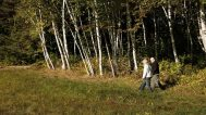 Michelle & David walk along the birch trees in their yard