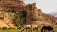 Wild horses roam the canyon floor