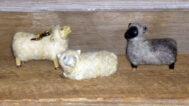 Bayle Owens, Sheep